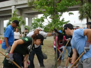 million_trees_miami_planting